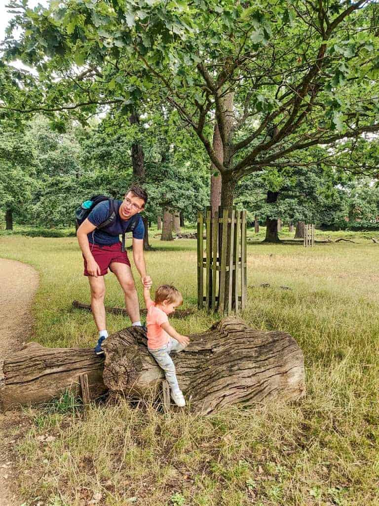 dad and son climbing on tree in Richmond Park