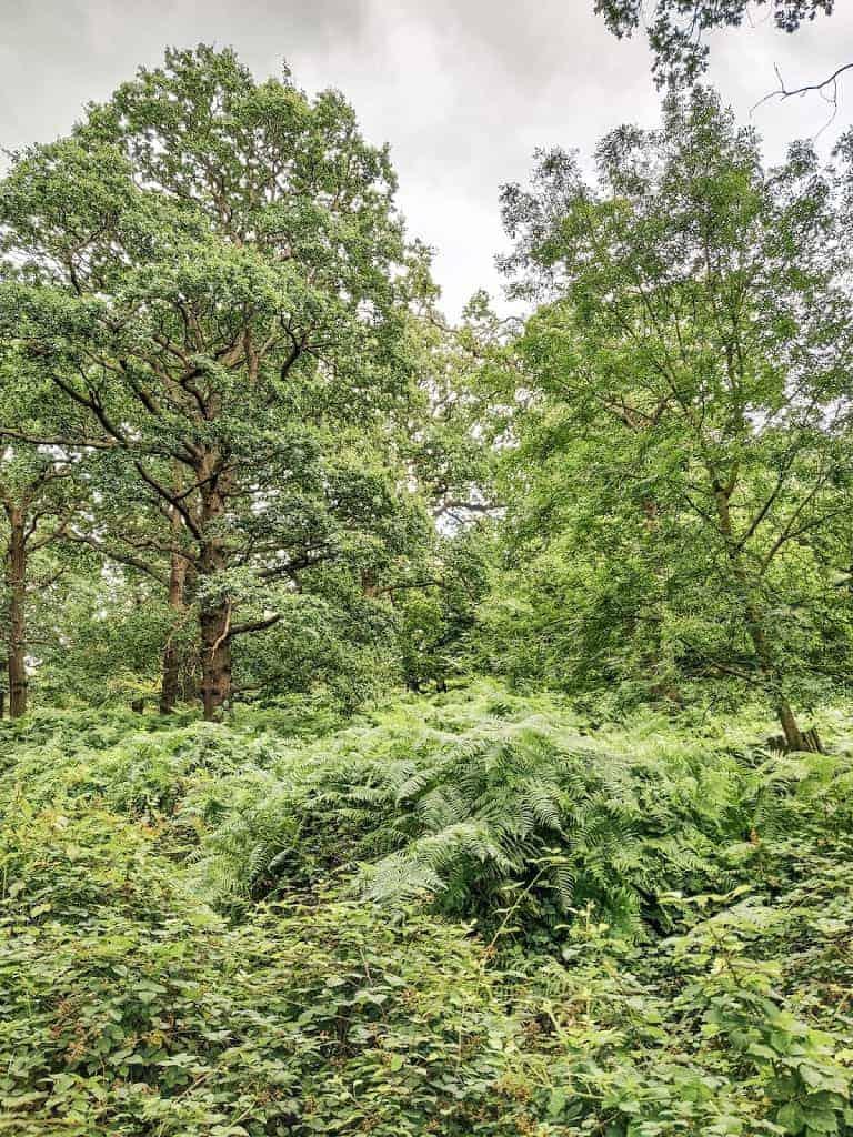 foliage in Richmond Park in London