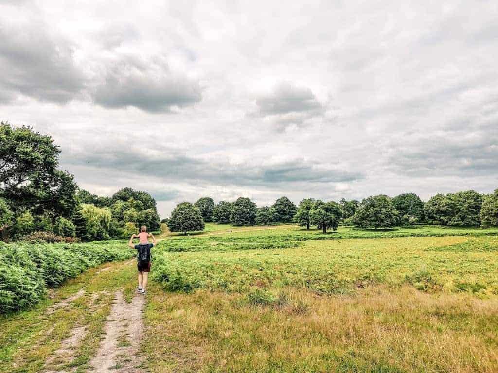 open field scenery in Richmond Park