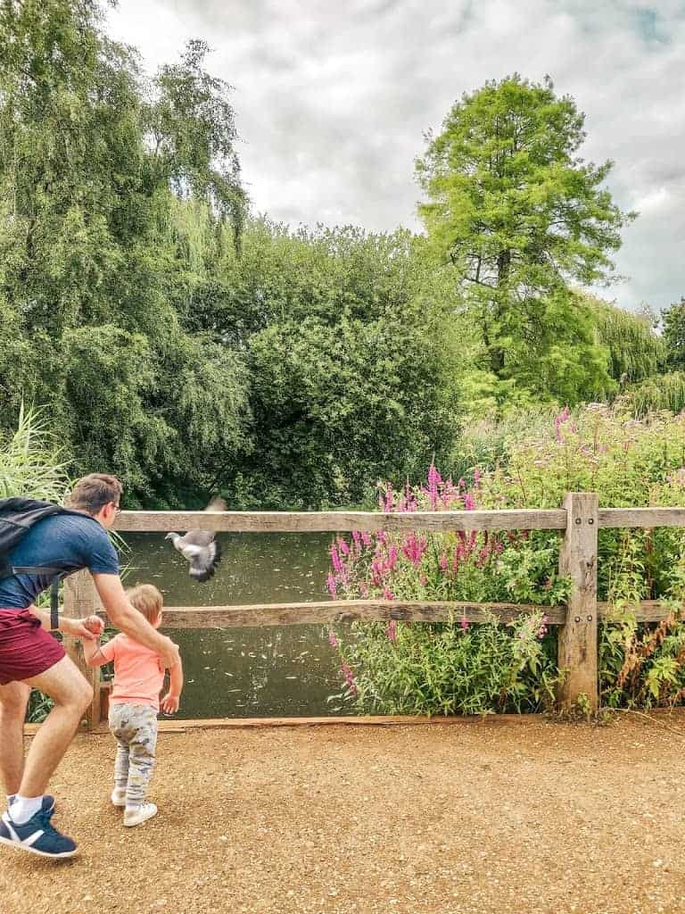 dad and toddler chasing pigeon on bridge